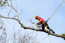 élagage / abattage arbre